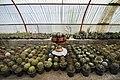 Greenhouses in qom عکس های گلخانه دنیای خار در روستای مبارک آباد قم 20.jpg
