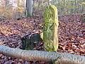 Grenzstein Waldebene Ost (ST) Nr 52.JPG