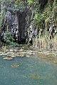 Grotte et nénuphars à Tam Coc.jpg