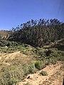 Grupo de árboles alado del camino en Incallajta.jpg