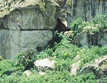 La caverna Guila Naquitz a Oaxaca, Messico è il sito di domesticazione precoce di diverse colture alimentari, tra cui teosinte (un antenato di mais).