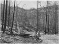 Gunther Heeren indicating a one-year old ponderosa pine seedling on the Keller Ridge burn of August 1958. Almost the... - NARA - 298692.tif