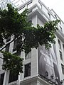 HK Central Pedder Street facade Pedder House tree A&F outdoor ads Oct-2012.JPG