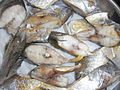 HK food pan-fried fish fillets 煎魚塊 June-2012.JPG