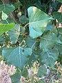 Halberstad Flora Pflanzen Harz 22 05 35 158000.jpeg