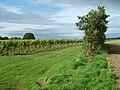 Halfpenny Vines - geograph.org.uk - 1021724.jpg