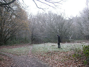 Ham Common, London - Ham Common Woods in December