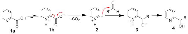 The mechanism of the Hammick reaction