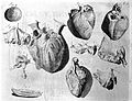 Heart illustration, 18th century Wellcome L0000339.jpg