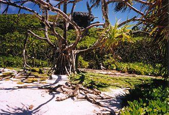 Henderson Island (Pitcairn Islands) - Image: Henderson
