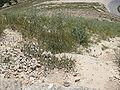 Herodion IMG 0666.JPG