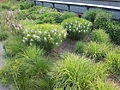High Line, New York City (2014) - 15.JPG