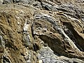 Highly convoluted gneiss (Archean; Norris South roadcut, Madison County, Montana, USA) 2 (43713103830).jpg