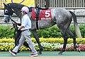 Hokuto Sultan 20080601P1.jpg