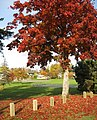 Horner Park autumn colour. READ INFO IN PANORAMIO-COMMENTS - panoramio.jpg