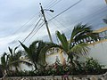 Hostal Palmeras Playa Milina - panoramio (4).jpg