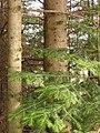 Hugging Trees (136315072).jpg