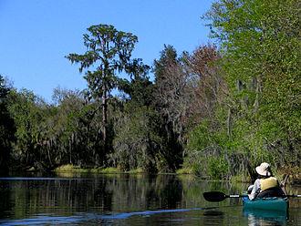 Alafia River - Image: Hurrah Lake Alafia River State Park