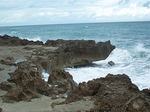 Anastasia Formation - Part of the formation on Hutchinson Island