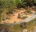 Hydrochoerus hydrochaeris - Capybara BZ ies.jpg