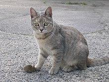 Il Gatto e il Topo 2.jpg
