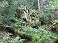 Im Steintal oberhalb von Lautenbach, Gernsbach (2).jpg