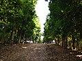 Inarihan Farm Resort 9.jpg