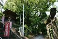 Inasa Shrine in Shiroishi bell tower and camphor tree.jpg