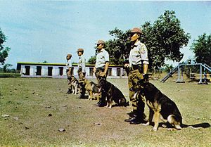 Police dog - Indonesian K9 police unit
