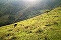 Ingushetia, Закатный золотой свет на склонах долины Армхи, горы Ингушетии, Кавказ.jpg
