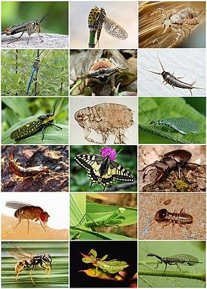 Böcek Çeşitliliği.jpg