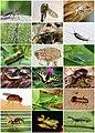Insecta Diversity.jpg