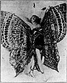 Irene Castle - Butterfly Dance 2 1922.jpg