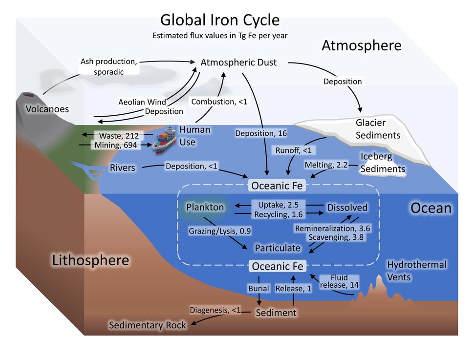 Iron cycle7