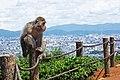 Iwatayama Monkey Park (3810522127).jpg