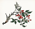 Japanese illustration from Bairei Gakan by Kono Bairei, from rawpixel's original plates 00007.jpg