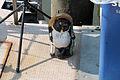 Japanese raccoon dog statue in Hiroshima - Sarah Stierch.jpg
