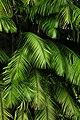 Jardín Botánico Singapur 38.jpg