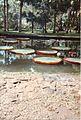 Jardin de Pamplemousses (3002666628).jpg