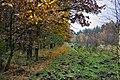 Jesień na skraju lasu - panoramio.jpg
