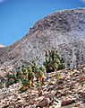 Joshua Tree National Park - 49 Palms Oasis - 1a.jpg