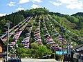 Kanna Koinobori Festival 2014 1.jpg