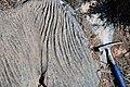Karren weathering (Wirrapowie Limestone, Lower Cambrian; Mernmerna railroad bridge dry creek cut, South Australia) 1.jpg
