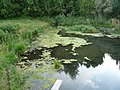 Karst spring Podzuevsky.Карстовый источник Подзуевский. Пермский край - panoramio.jpg