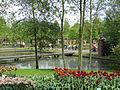 Keukenhof Garden (8).JPG
