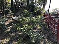 Kifukusan Hill in Shukkei Garden 1.jpg