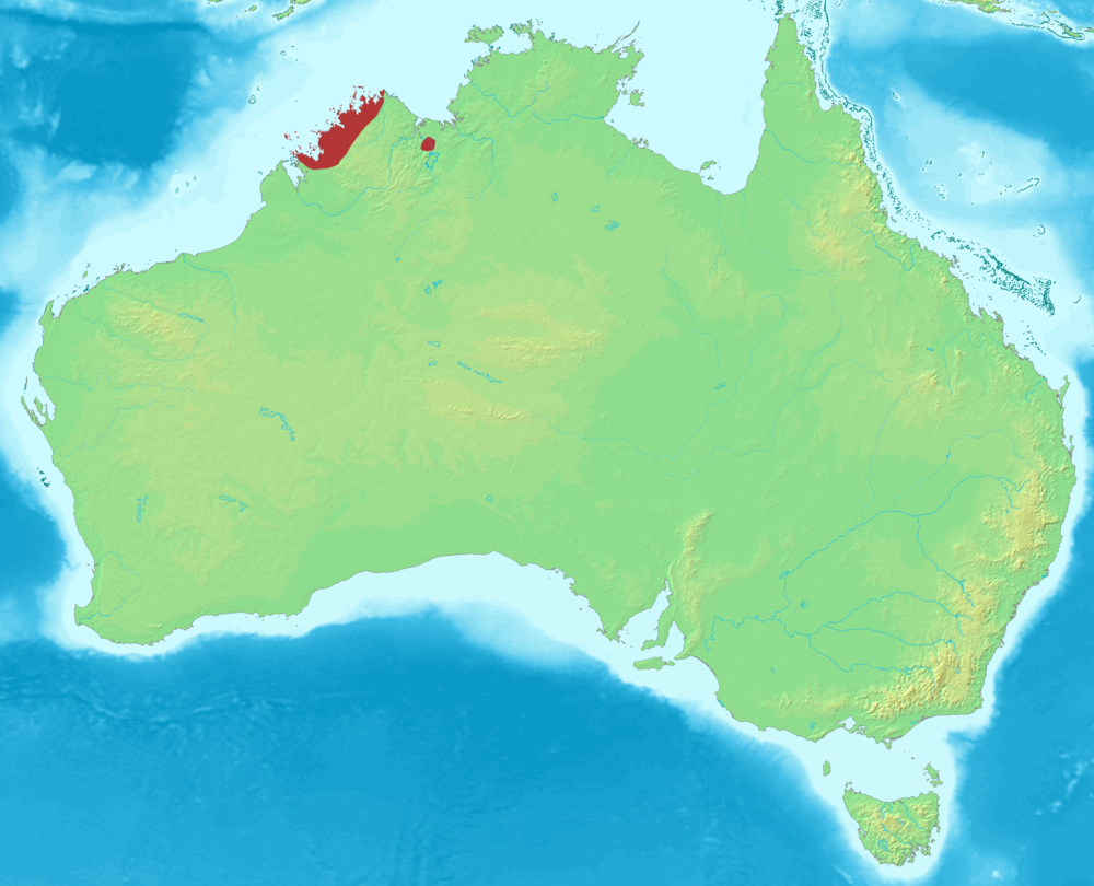 The average litter size of a Kimberley rock rat is 2