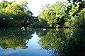 Kingfield Pond, Kingfield, Woking - geograph.org.uk - 41049.jpg