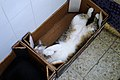 Kitty sleeping in a box.jpg