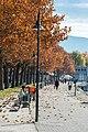 Klagenfurt Friedelstrand Platanen-Allee mit Promenade 09112015 2302.jpg